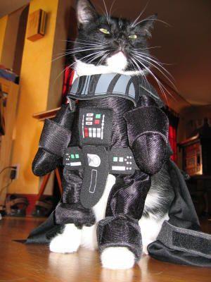 dark vador cosplay cat